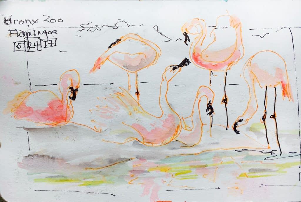 flamingoes urban sketching