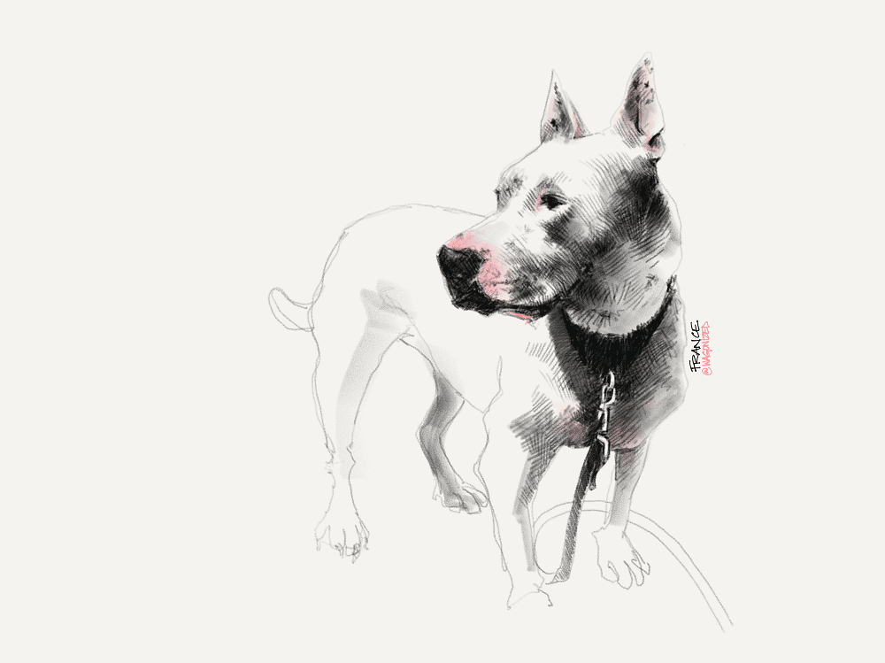 France Van Stone dog sketch