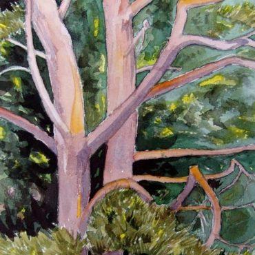 Tree-GrimsDyke